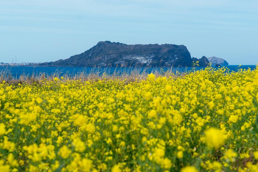 Île de Jeju Coree du Sud
