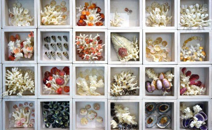 coquillages Corée du Sud