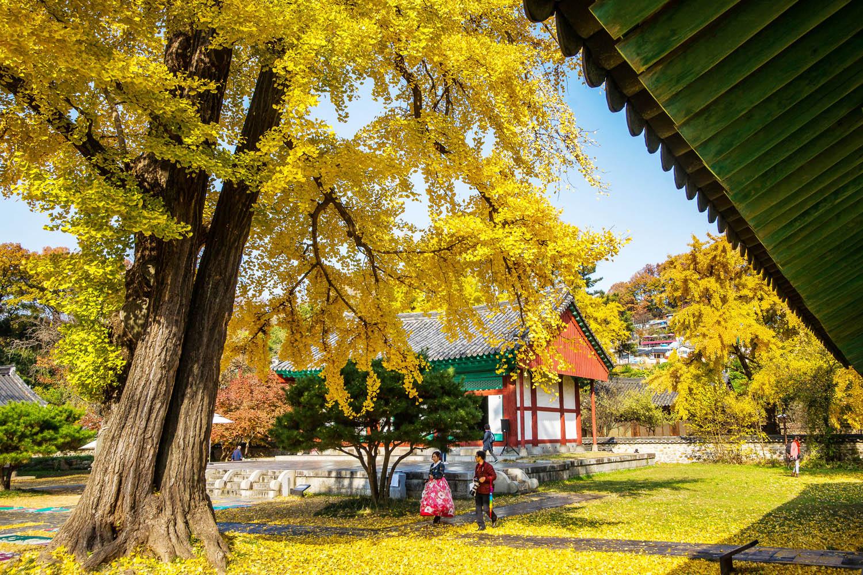 corée circuit automne 21 jours