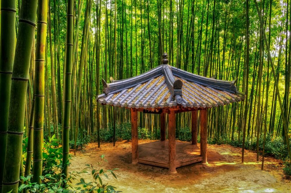 Damyang forêt de bamboo Corée du Sud