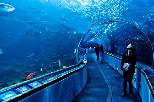 aquarium busan