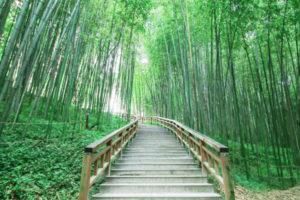 damyang bambou forest