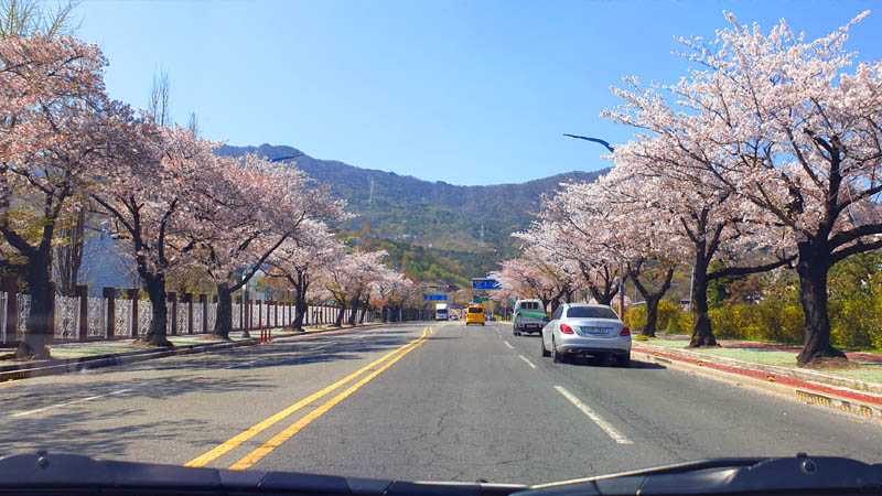 conduire en coree du sud